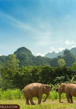 Dubai, Phuket and Elephant Hills Tour!