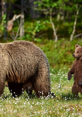 Luxury Calgary & Banff with car hire and Grizly Bears Tour!