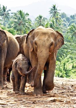 Sri Lanka Wildlife Discovery Tour and 7 night beach stay!