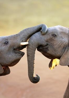 3 nights Kruger Wildlife Safari and Mauritius All Inclusive!