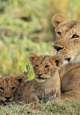 Through the Rift 4nt Kenya Safari and 7 nts Mauritius All Inclusive