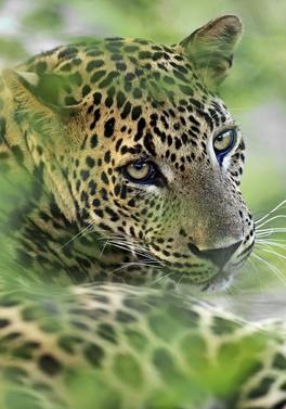 Sri Lanka Wildlife Discovery tour and 8 night all inclusive beach