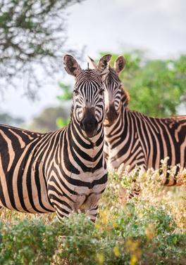 3 night Mombasa Rendezvous Safari and 8 night Sarova Whitesands