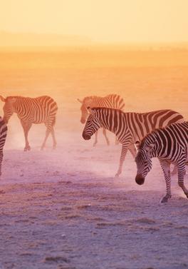 Kilimanjaro Safari from Nairobi to Mombasa plus all inclusive beach stay